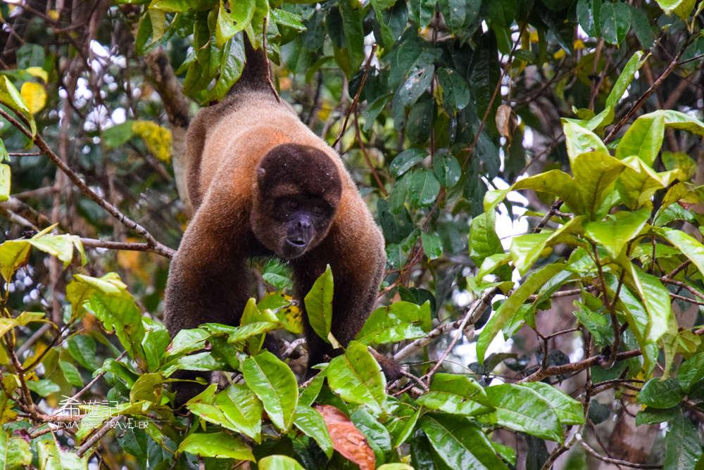 亞馬遜叢林 Amazon River